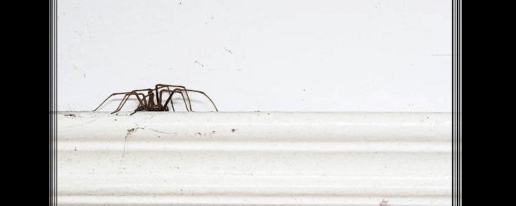 Spider Control Baulkham Hills